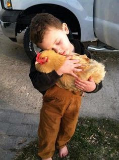 hug2 chicken